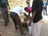 DEA - planting trees_3