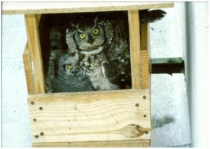 owls in box
