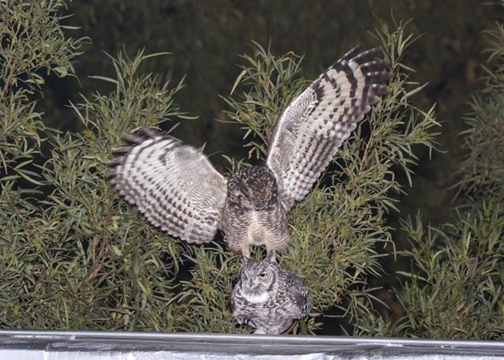 Owls 190621 Picture1