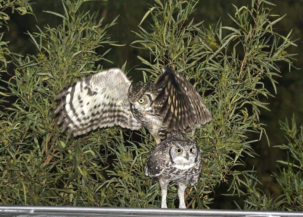 Owls 190621 Picture2