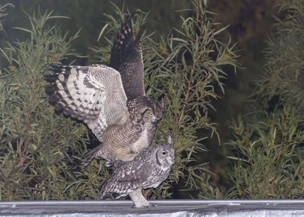 Owls 24062021 Picture1
