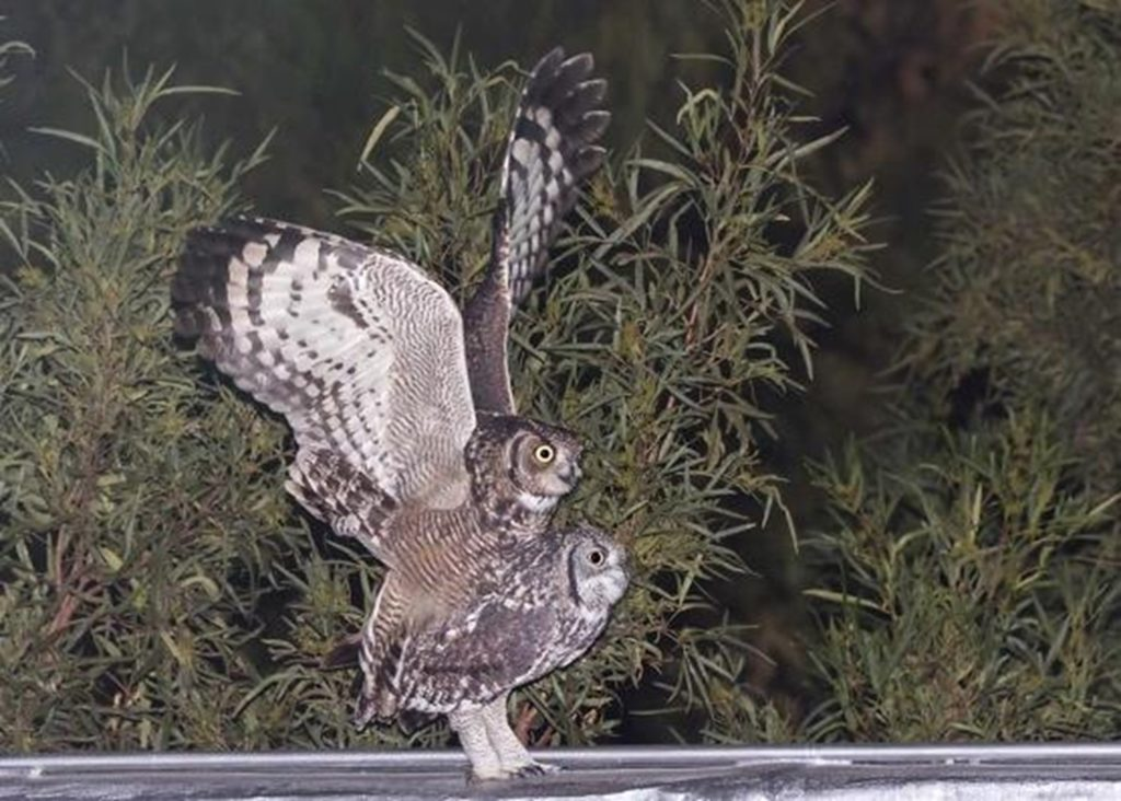 Owls 24062021 Picture3